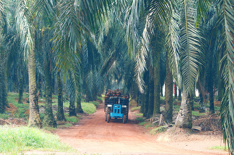 Palm Oil Responsible Sourcing